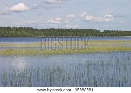 water landscape with a rushy lake