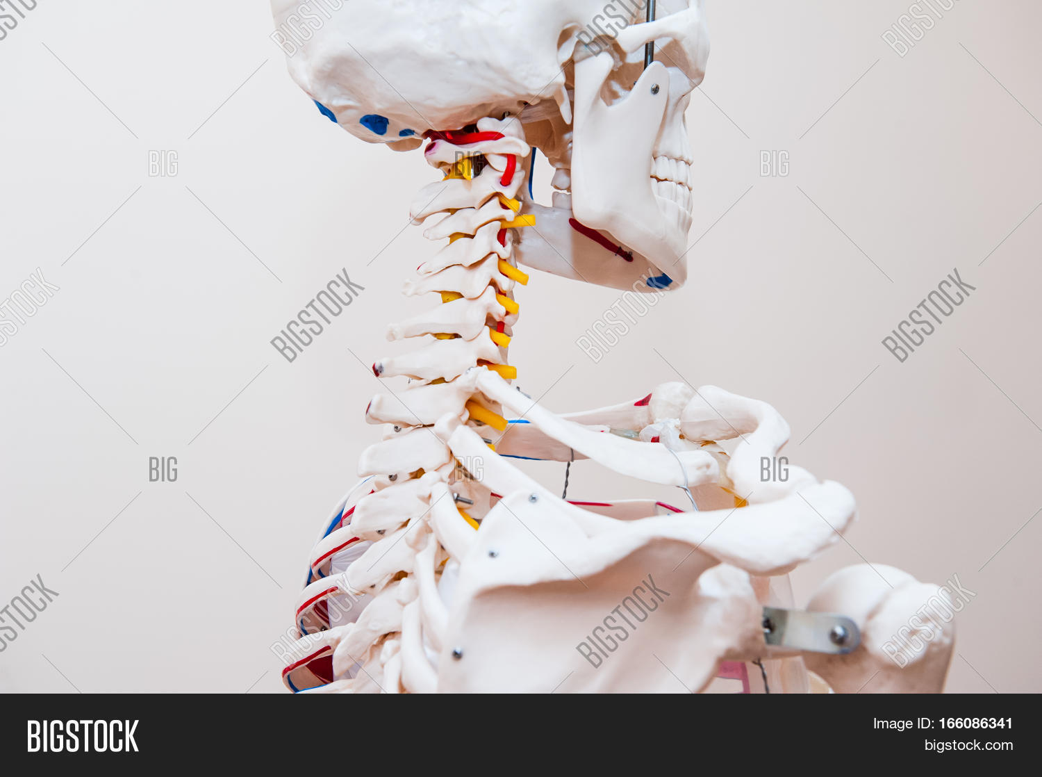 Close Side View Human Image Photo Free Trial Bigstock