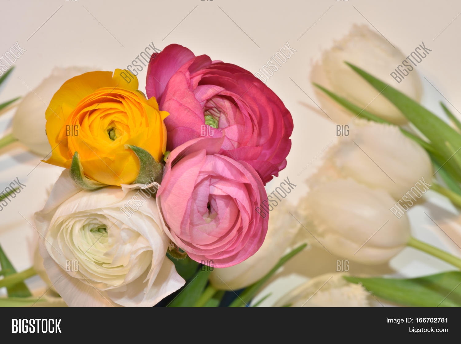 Beautiful flowers image photo free trial bigstock beautiful flowers in different colours ranunculus tulips white background springflowers izmirmasajfo