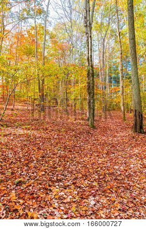 Autumn beautiful forest ground covered with fallen leaves.