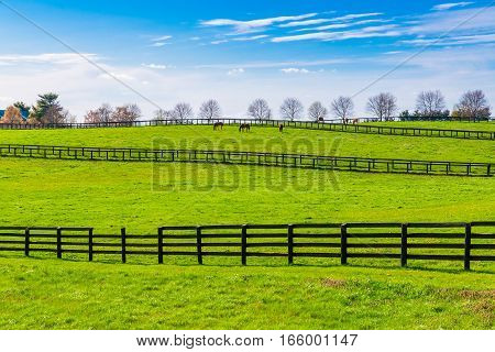 Green pastures of horse farms. Countryside spring landscape. Kentucky. USA