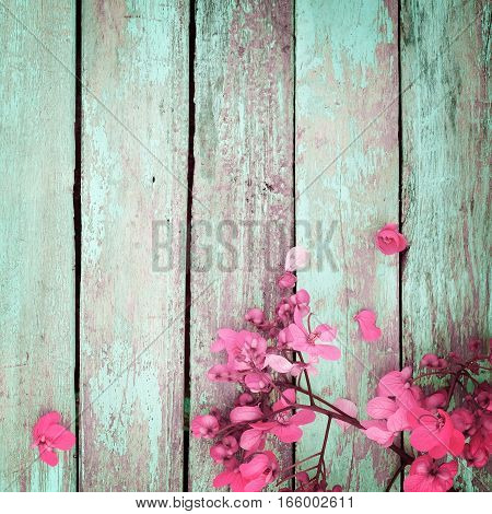 pink flowers on vintage wooden background border design. vintage color tone - concept flower of spring or summer background