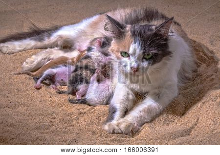 Cat Baby In The Sand