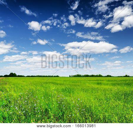 Green Field Under The Blue Sky. Summer Landscape.