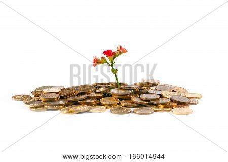 Russian metal coins of gold color and delicate sprout flower as a symbol of good luck in economics and business