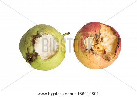 Guava and apple with bite mark gnawed by rats isolated on white background.