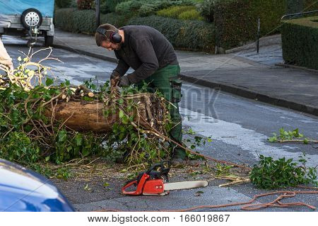 Forestry worker sawing a tree trunk with a chainsaw and professional tool.