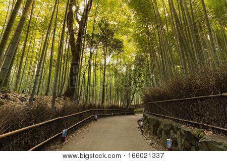Arashiyama bamboo forest with walking pass in Kyoto Japan