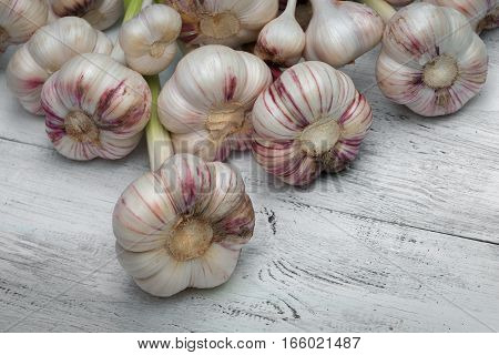 Harvest of fresh garlic lies on a white wooden board