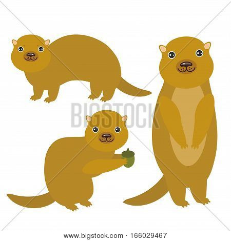 Set of funny Gopher ground squirrel isolated with acorn on white background. Vector illustration