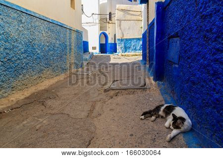 Cat Sleeping In The Small Streets In Blue And White In The Kasbah Of The Old City Rabat In Marocco