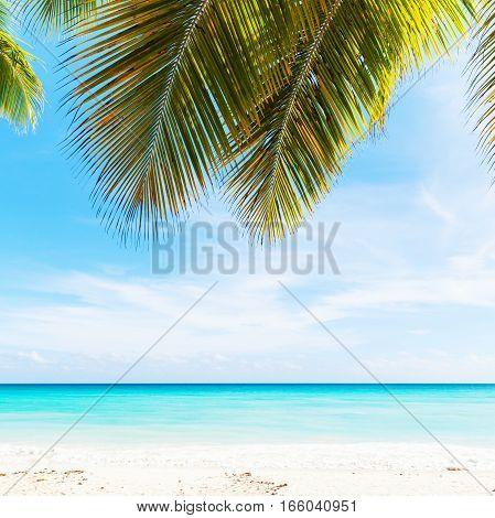 Tropical Beach Photo Background