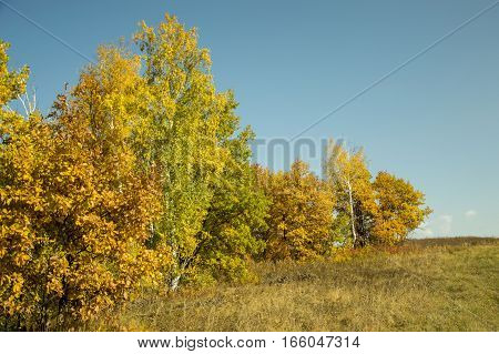 The autumn forest is in a suburb. Yellow foliage of oak
