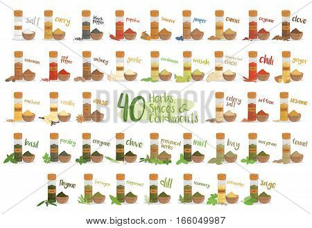 Set of 40 different culinary herbs species and condiments in cartoon style.