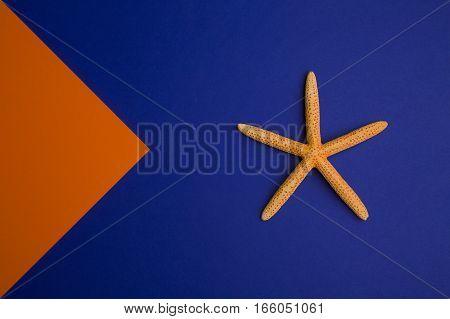 orange starfish on the blue and orange background