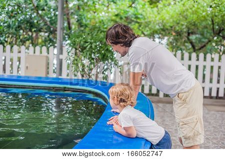 Father And Son Looks Into The Pool With The Fishes