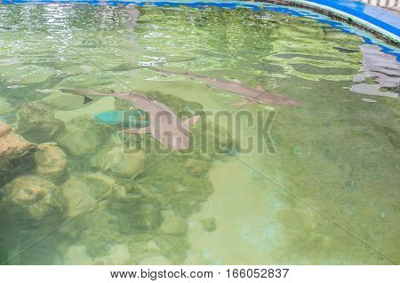 The Shark Swims In The Aquarium. View From Above