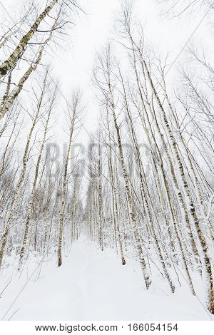 Winter forest. Snowy wood captured with Fish-Eye lens. Path between trees.
