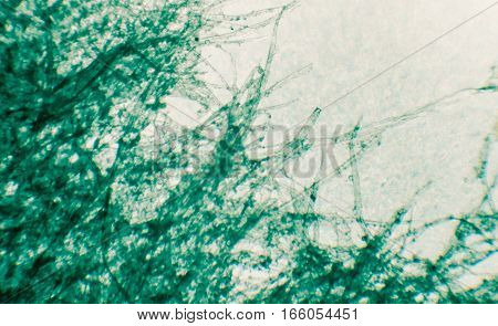 textute pf torn green paper microscope view,