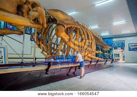Nha Trang, Vietnam - January 16, 2017 A Whale Skeleton At The National Oceanographic Museum Of . The