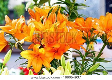 Beautiful orange lily flowers on a sunny day