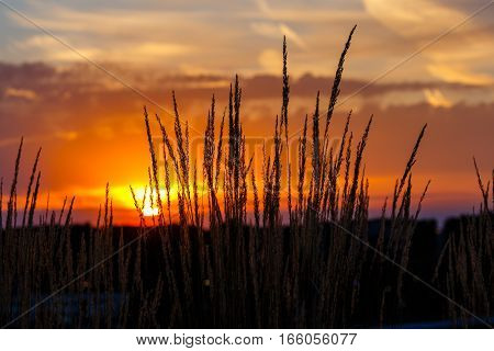 Colorful sunset with a silhouette of grass in the foreground.
