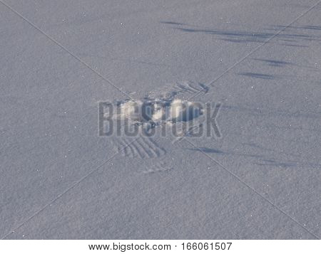 Traces of wings of the birds left on snow at take-off