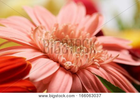 Macro of bloss pink flower on blurred abstract background