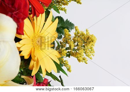Yellow and red flowers isolated on white background