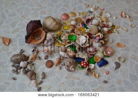 Shells lot small large scattering of DIY creativity