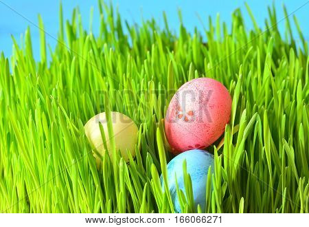 Three colored easter eggs on green grass