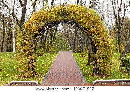 Arch set of leaves in the park.
