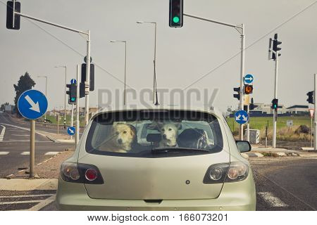 Two dogs behind the rear car window.