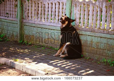 Black Grinning Non-Pedigree Dog Sitting on a Village Street near a Fence on a Sunny Summer Day
