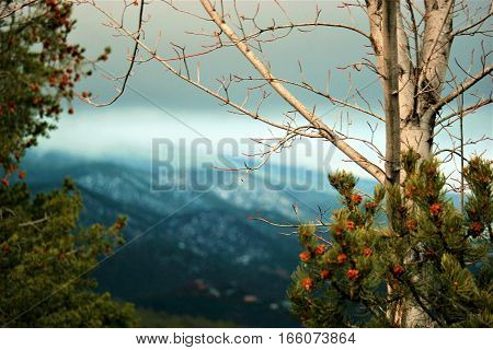sun reflecting on trees in foreground with snow covered mountain in background