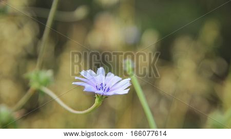 Lite Wildflower Background