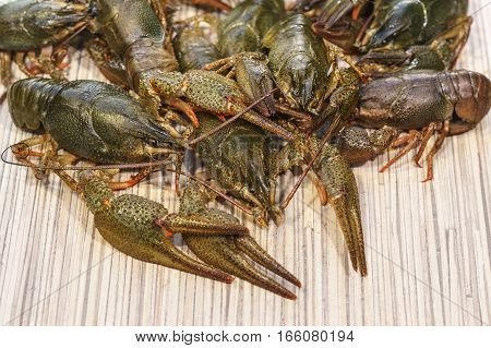 Shirokopalyj crayfish (lat. Astacus astacus) is a species of decapod crustacean of the infraorder Astacidea