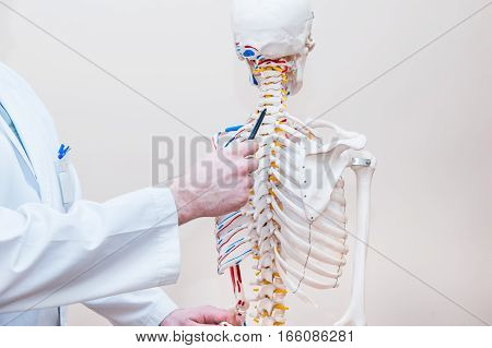Closeup On Medical Doctor Man Pointing On Cervical Spine Of Human Skeleton Anatomical Model. Selecti