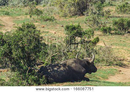 Addo Elephant National Park,eastern Cape,south Africa
