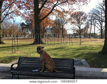 dog sitting on a park bench in Capitol Hill