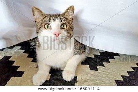 cute tabby cat peeking from under a white bed skirt