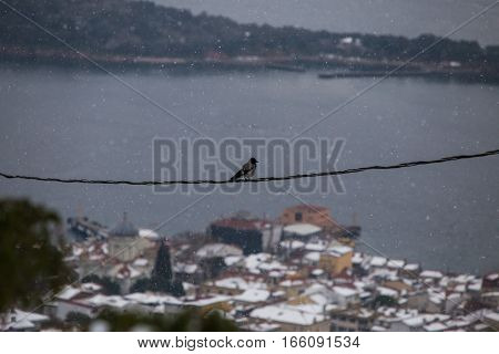 Bird on a wire with Snow and sea
