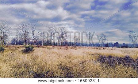 Moody winter sky over Chobham common and heathland