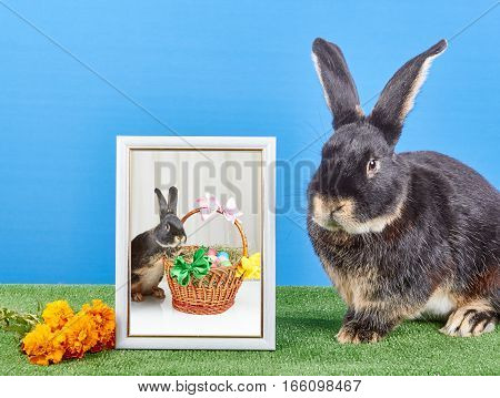 On a light background bunny sitting near photograph in framed