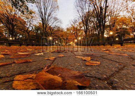 New York outdoors fall autumn Central park
