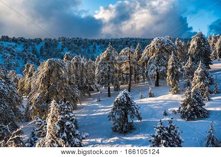 Picturesque winter landscape and blue sky. Troodos Mountains Cyprus.
