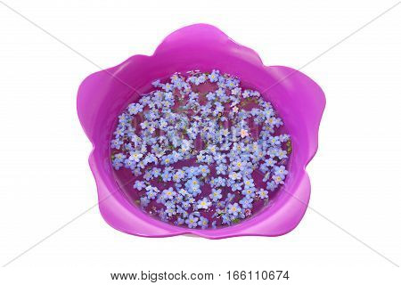 Forget-me-nots in a tulip-shaped bowl. Forget-me-nots represent Alzheimer awareness.