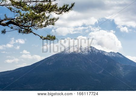 Snow capped Sakurajima volcano and branches of pine in early spring