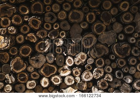 The round logs many side with sunlight