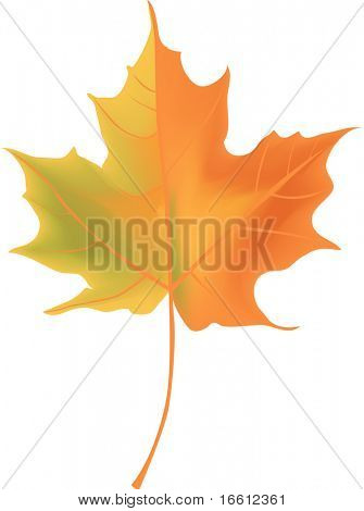 Autumn leaf isolated vector